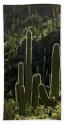 Saguaro Cactus Backlit Beach Towel