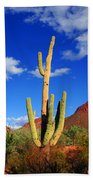 Saguaro Np Beach Towel