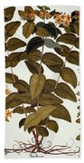 Saint-johns-wort, 1613 Beach Towel