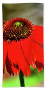 Salsa Red Coneflower Beach Towel