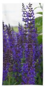 Salvia In The Spring Beach Towel