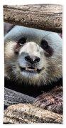 San Diego Zoo California Giant Panda Beach Towel