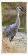 Sandhill Beauty By The Pond Beach Towel