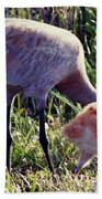 Sandhill Crane And Chick Beach Towel