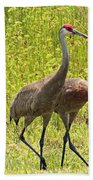 Sandhill Crane Family Beach Towel