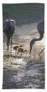 Sandhill Crane Family In Morning Sunshine Beach Towel by Carol Groenen