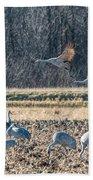 Sandhill Crane Series #3 Beach Towel