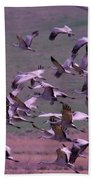 Sandhill Cranes  Beach Sheet