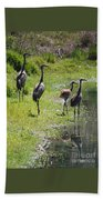 Sandhill Family By The Pond Beach Sheet