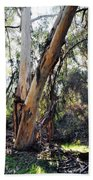 Santa Barbara Eucalyptus Forest Beach Towel