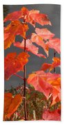 Sapling By The Pond Beach Towel