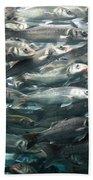 Sardines 1 Beach Towel