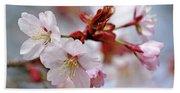 sargent 39 s cherry blossoms photograph by debbie oppermann. Black Bedroom Furniture Sets. Home Design Ideas