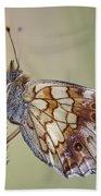 Satyr Butterfly On Blade Of Grass Beach Sheet