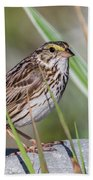 Savanah Sparrow Beach Sheet
