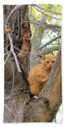 Scared Up A Tree Beach Towel