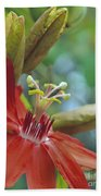 Scarlet Flame Passiflora  Beach Towel