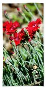 Scarlet Red Dianthus Beach Towel