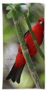 Scarlet Tanager Beach Sheet