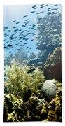 School Fish Rainbow Beach Towel by Perla Copernik