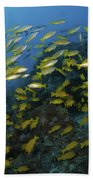 School Of Yellow Snapper, Great Barrier Beach Towel