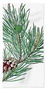 Scots Pine, Pinus Silvestris Beach Towel