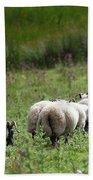 Scottish Sheep Beach Sheet