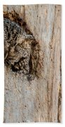 Screech Owl In A Tree Beach Towel