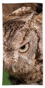 Screech Owl In Flight Beach Towel