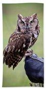 Screech Owl Perched Beach Towel by Athena Mckinzie