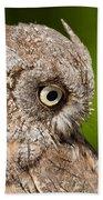 Screech Owl Portrait Beach Towel