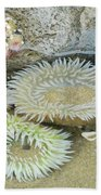Sea Anemones Beach Sheet