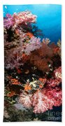 Sea Fans And Soft Coral, Fiji Beach Towel