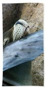 Sea Lion Itch Beach Towel