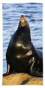Sea Lion Sing Beach Towel