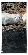 Sea Lions At Sea Lion Cove State Marine Conservation Area Beach Towel