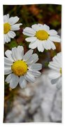 Sea Mayweed Beach Towel