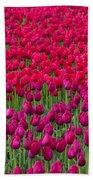 Sea Of Tulips Beach Towel