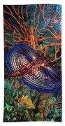 Sea Robin The Flying Gurnard Beach Sheet