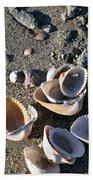 Sea Shells At Folly Beach In Charleston Sc Beach Towel