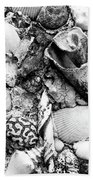 Sea Shells - Nassau, Bahamas Beach Sheet