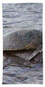 Sea Turtle On Rock Beach Towel
