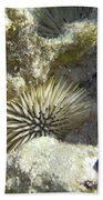 Sea Urchin Beach Towel