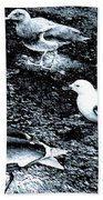 Seagull Trio Beach Towel