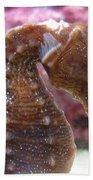 Seahorse2 Beach Towel
