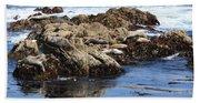 Seal Island Beach Towel