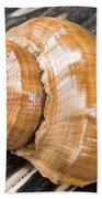 Seashell Beach Towel