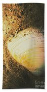 Seashells And Beach Colours Beach Towel