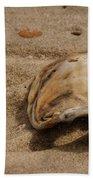 Seashells At The Seashore Beach Sheet