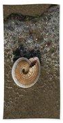 Seashells By The Sea Beach Towel